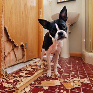Trennungsstress beim Hund